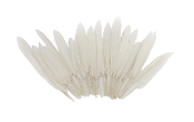"0.22 OZ 5""-7"" GOOSE FEATHER - WHITE (24 PACKS) PF-3087"