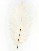 "1 PC 10""-12"" OSTRICH FEATHER - WHITE (24 PACKS) PF-3739"