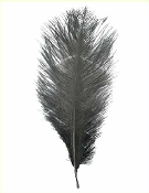 "1 PC 10""-12"" OSTRICH FEATHER - BLACK (24 PACKS) PF-3740"