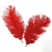 "2 PC 6""-8"" OSTRICH FEATHERS - RED (24 PACKS) PF-3747"