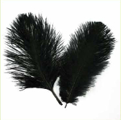 "2 PC 6""-8"" OSTRICH FEATHERS - BLACK (24 PACKS) PF-3749"